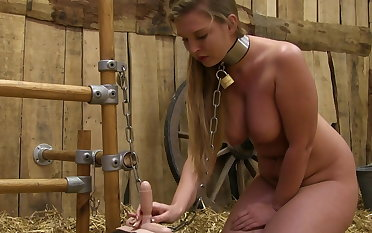 Milked primarily the sybian
